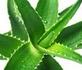 Productos de Gel de Aloe Vera